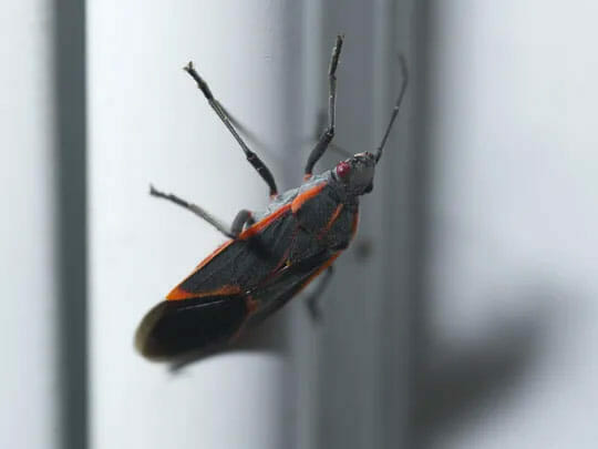 Bug on Insect Screens in Phoenix